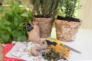 Hausapotheke | Pflanzenkraft | Aromaöle | Kräuter-Indoor-Workshop @ bitte aktuellen Kursort erfragen